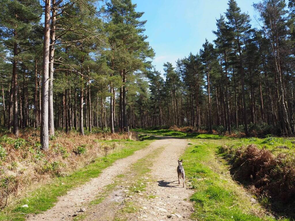 Woodland walks with Toggi…